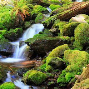 Wooded Stream by Jeff McVoy - Landscapes Waterscapes ( water, stream, forrest, green, moss, wooded, flow, woodland stream, renewal, trees, forests, nature, natural, scenic, relaxing, meditation, the mood factory, mood, emotions, jade, revive, inspirational, earthly,  )