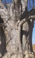 Screenshot of Baobab Wallpapers