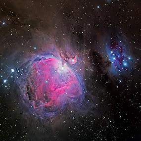 Orion Nebula by Adam Collins - Landscapes Starscapes ( orion nebula, m42, nigh sky, astrophoto )