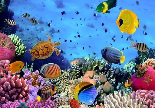 熱帶魚拼圖