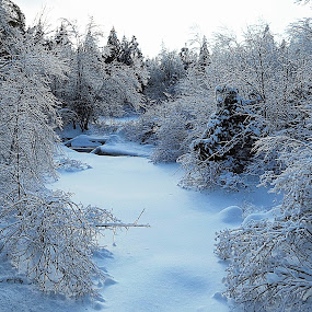 ICE STORM BEAUTY by Gary Colwell - Landscapes Weather ( stream, winter, ice storm, snow, woods,  )