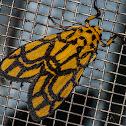 Asura Moth