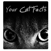 Your Cat Facts