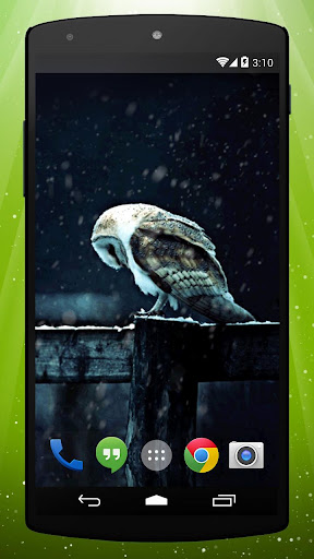 Night Owl Live Wallpaper