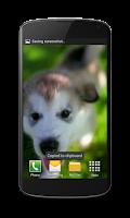 Screenshot of Little Puppy Video Wallpaper