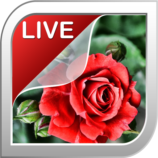 Rose Live Wallpaper 個人化 App LOGO-APP試玩