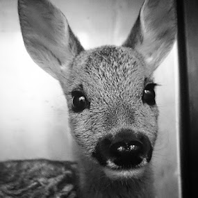 Bambi by Mirna Abaffy - Instagram & Mobile Instagram
