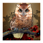 Owl Wallpaper icon