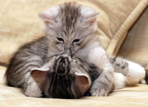玩免費個人化APP|下載小猫壁纸 app不用錢|硬是要APP