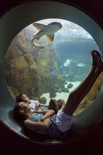 Waikiki-Aquarium-shark-exhibit - Kids watch a shark in an exhibit at the Waikiki Aquarium.