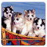 Dogs Jigsaw Puzzle icon