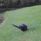 Snake Bird