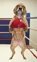 Screenshot of Boxing Dog Live Wallpaper