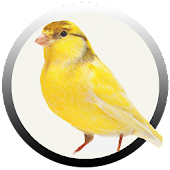 Canary Lovers