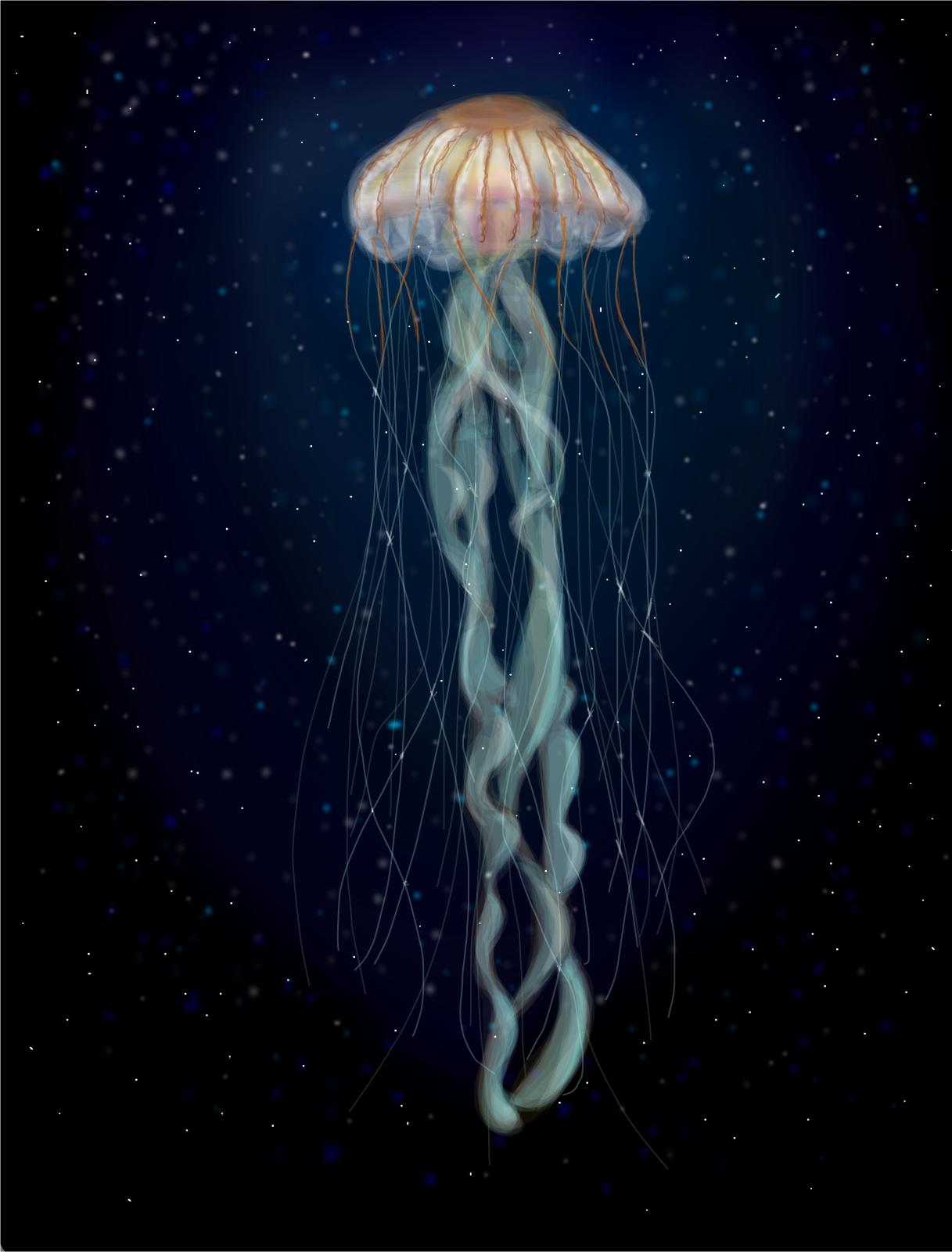 deep sea jellyfish drawings sketchport