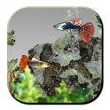 Free Guppys Fish Aquarium 3D icon