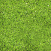 Green Grass Live Wallpaper