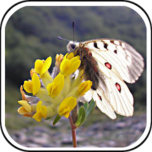 Free Apk android  FloraPairs 1.0  free updated on
