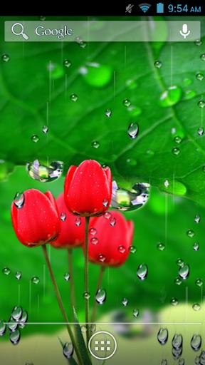 Flowers Rain Fall Wallpaper
