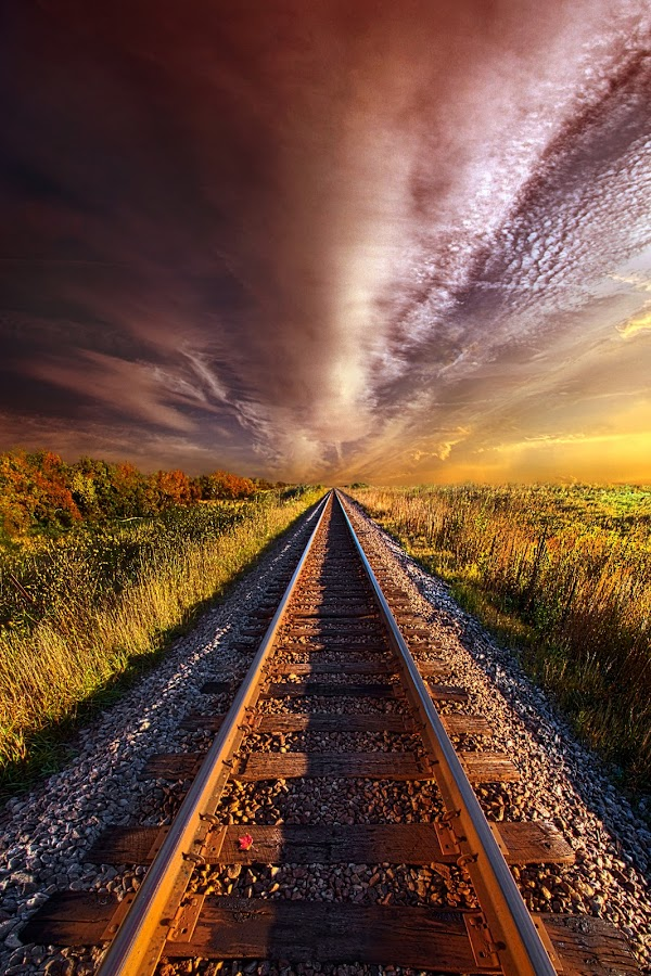 Walking the Line Till the Morning Shines by Phil Koch - Transportation Railway Tracks ( train tracks, railroad, travel, landscape, sun, love, blue sky, sky, tree, nature, rail, horizons, flowers, flower, clouds, park, twilight, horizon, back light, tracks, shadows, wild flowers, field, color, trees, landscapephotography, beam, sunrise,  )