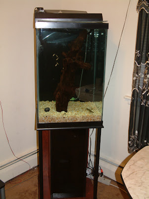Selling My Fish Tanks