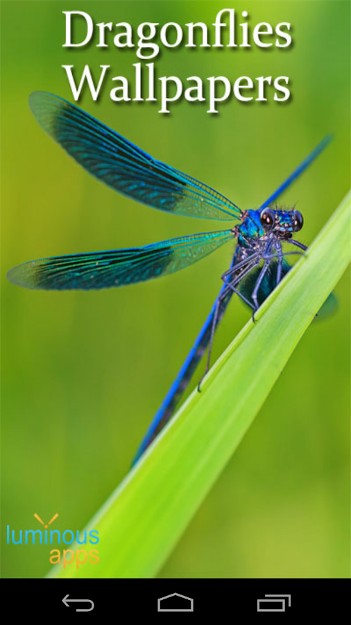 Dragonflies live wallpaper android apps on google play - Free dragonfly wallpaper for android ...