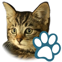 Cats icon