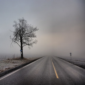 Keep your eyes on the road.... by Stine Engelsrud - Transportation Roads ( tree_framing, rsa_trees, _rsa_nature, rsa_ladies, unitedbytrees, top_landscape, rsa_rural, treeshunter )