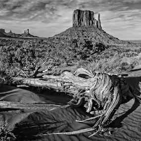 Monument Valley Number 1 by Flavio Mini - Black & White Landscapes ( monument valley, utah, black and white, landscape, dessert,  )