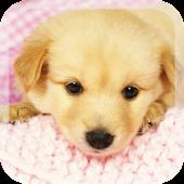 Little Puppies Live Wallpaper