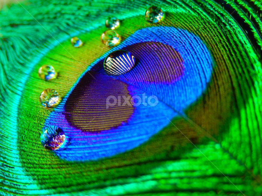 Water Drops by Soumik Nandi - Artistic Objects Still Life (  )