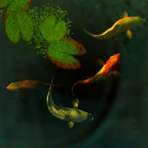 Koi fish 3d android apps on google play for Koi fish games