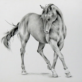 The Filly by Alicia McNally - Drawing All Drawing ( equine, horse drawing, horse, quarter horse, horse art,  )