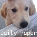 Daily Paper icon