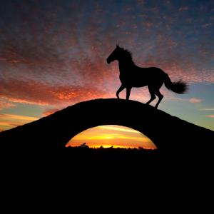 konj i most_1.JPG