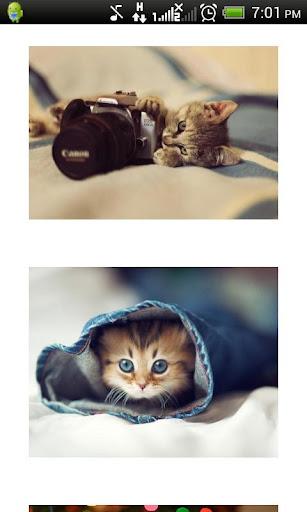 かわいいネコ