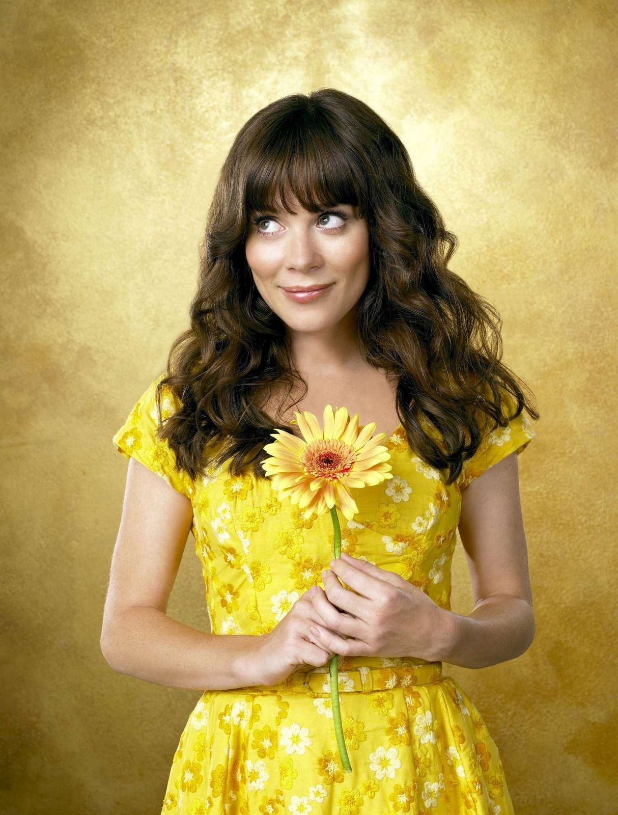 Pushing Daisies Wallpapers Movie Wallpapers