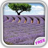 Lavender Fields Live Wallpaper