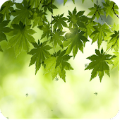 green leaf live wallpaper