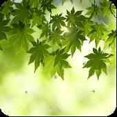 green leaf live wallpaper