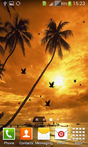 Sunset Birds Live Wallpaper-HD