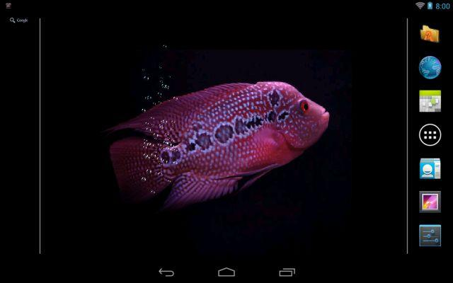 Aquarium Flowerhorn LWP - screenshot