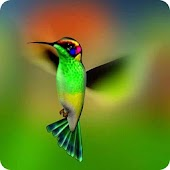 Hummingbird Wallpapers