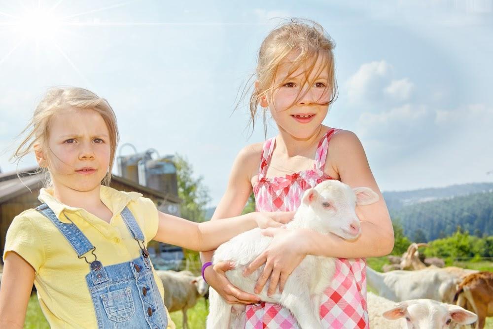 Erlebe die Ziegen und Schafe hautnah.