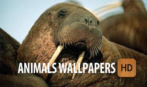 動物の壁紙HD無料