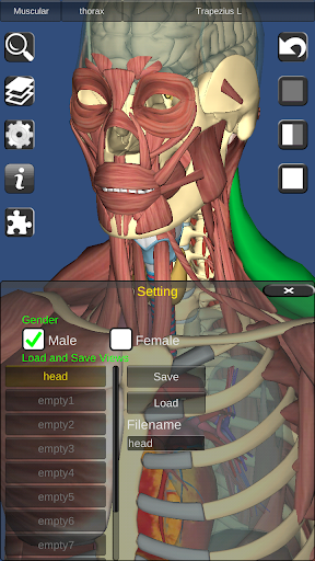 3D Bones and Organs (Anatomy) 3.1.0 screenshots 6