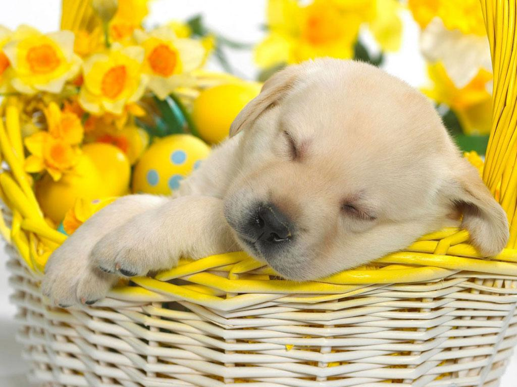 Cute Puppy Dog HD Android Apps on Google Play