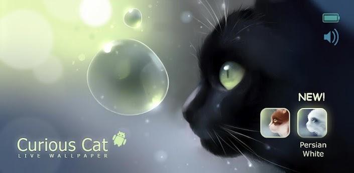 Curious Cat apk