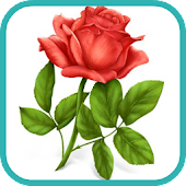 How to Draw a Rose Flower Art
