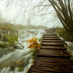 Plitvice Park by Ronald Susaya - Uncategorized All Uncategorized ( plitvice, unique, croatia, beauty, stunning, unesco )